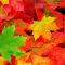 Note d'autunno